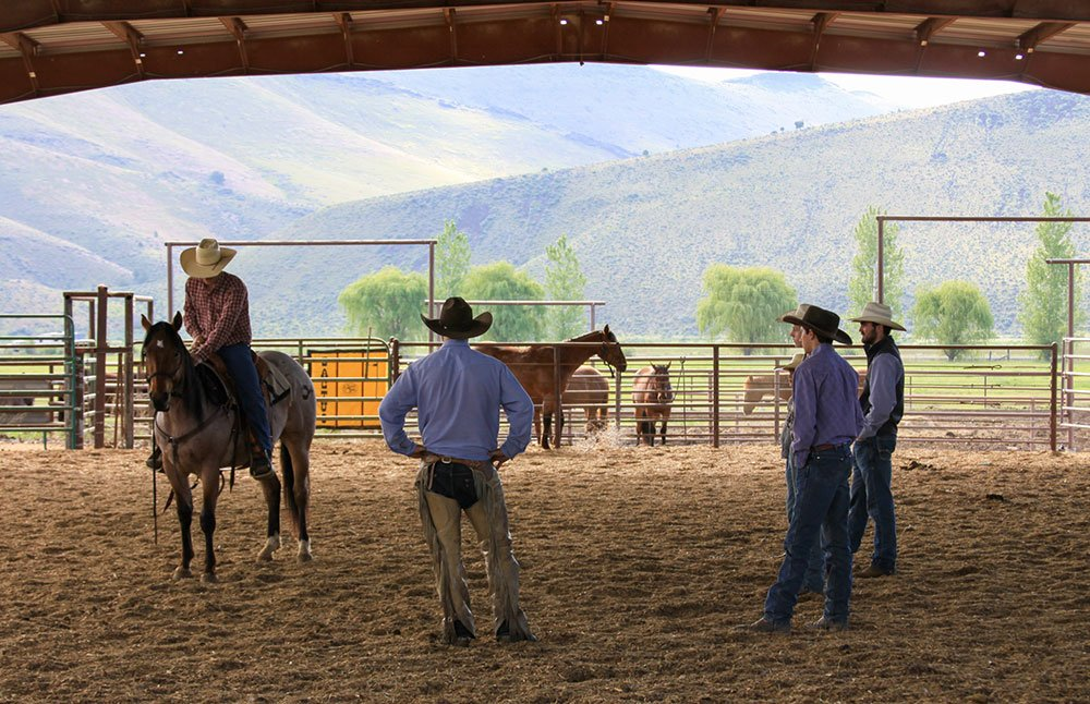 Young Rancher colt training clinic